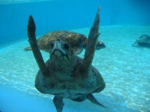 沖縄水族館の亀